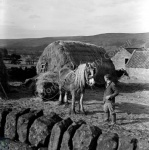 Mr Hague, Haymaking at Farndale